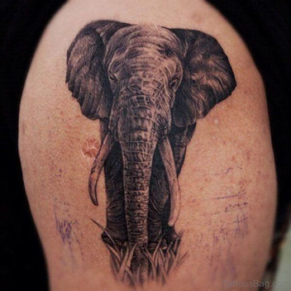Beautiful Elephant Tattoo On Shoulder