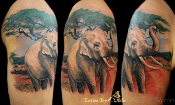 Colorful Elephant Tattoo On Shoulder