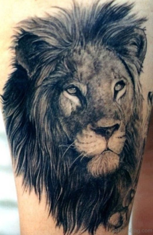 Fabulous Lion Tattoo Design