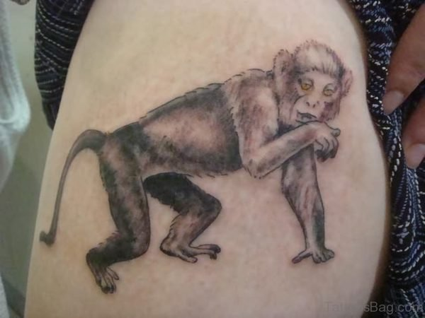 Grey Monkey Tattoo On Shoulder