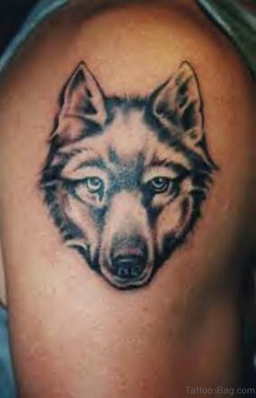 Grey Ink Wolf Tattoo On Right Shoulder