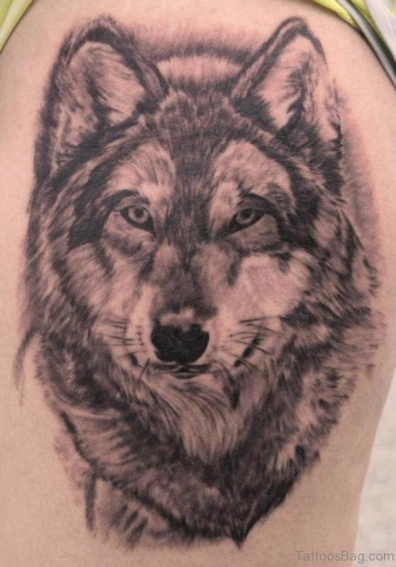 Grey Wolf  Tattoo