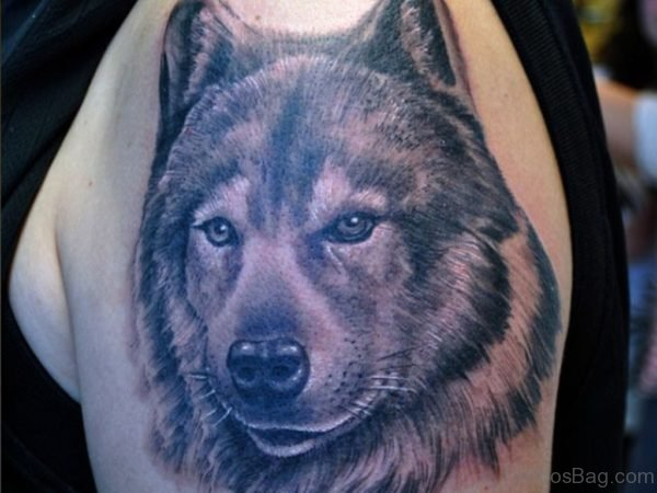Wolf head Tattoo On Shoulder