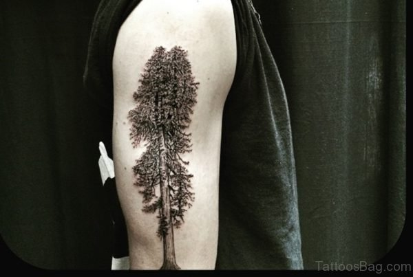 Giant Tree Tattoo on Shoulder
