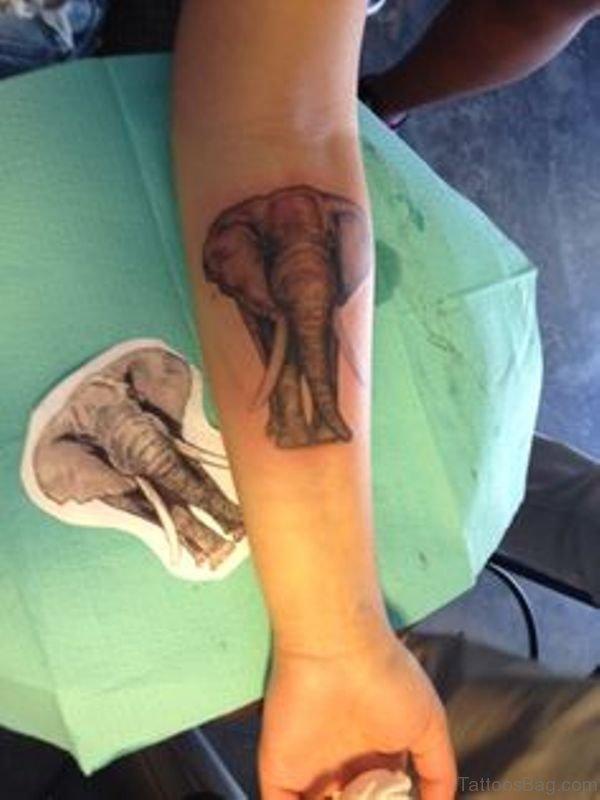 Nice Elephant Tattoo On Forearm
