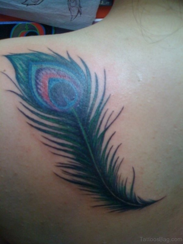 Peacock Feather Tattoo Design On Shoulder