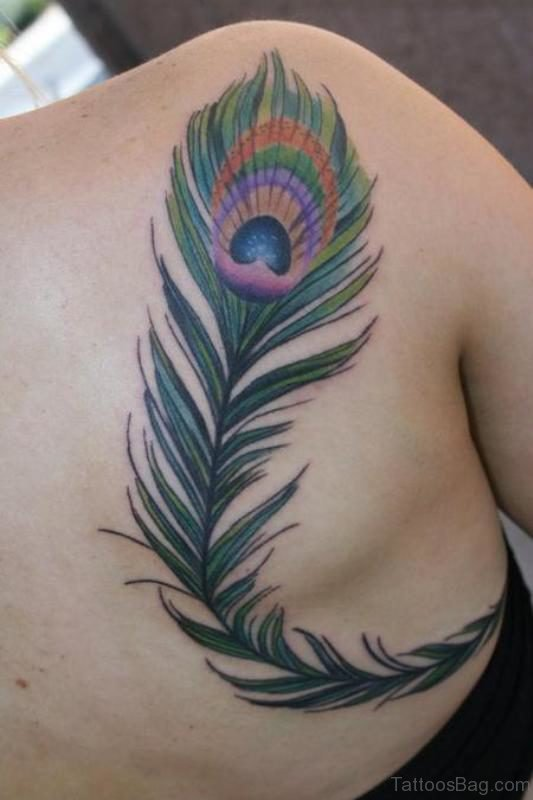 Simple Peacock Feather Tattoo On Shoulder Back